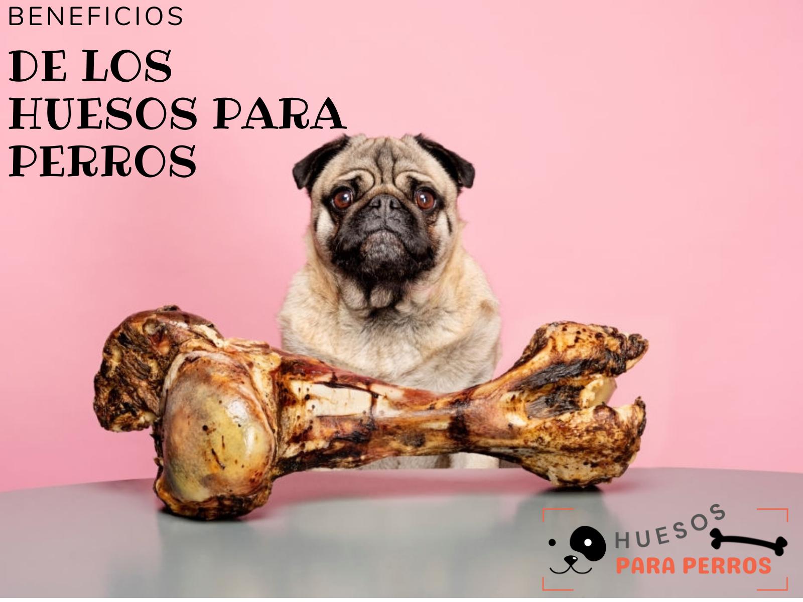 son buenos los huesos para perros