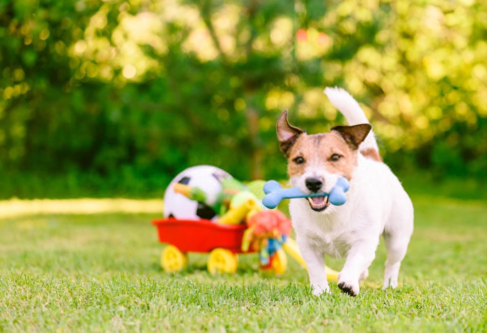 huesos goma para perros