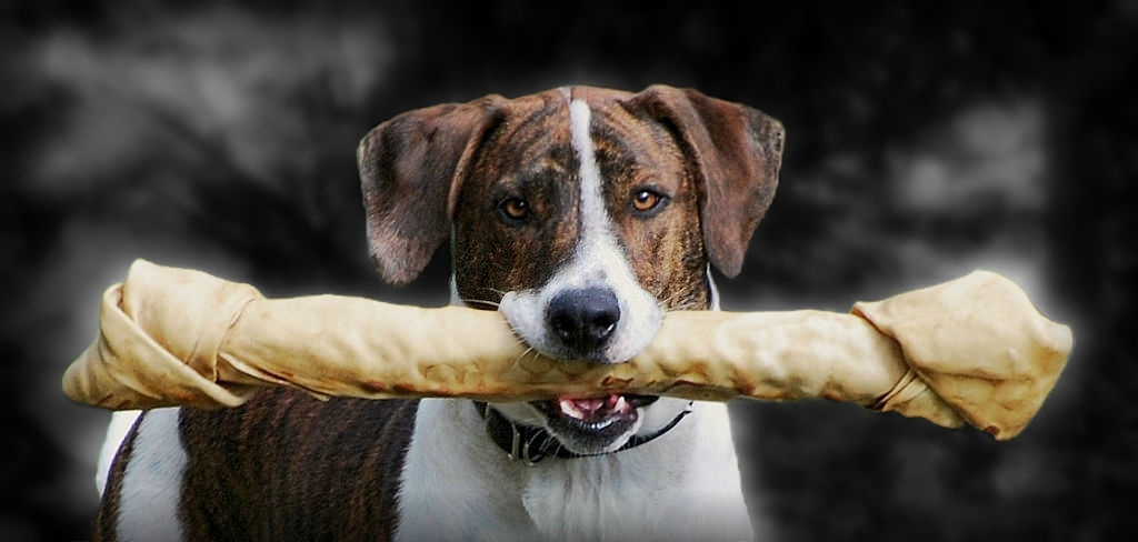 huesos para perros grandes