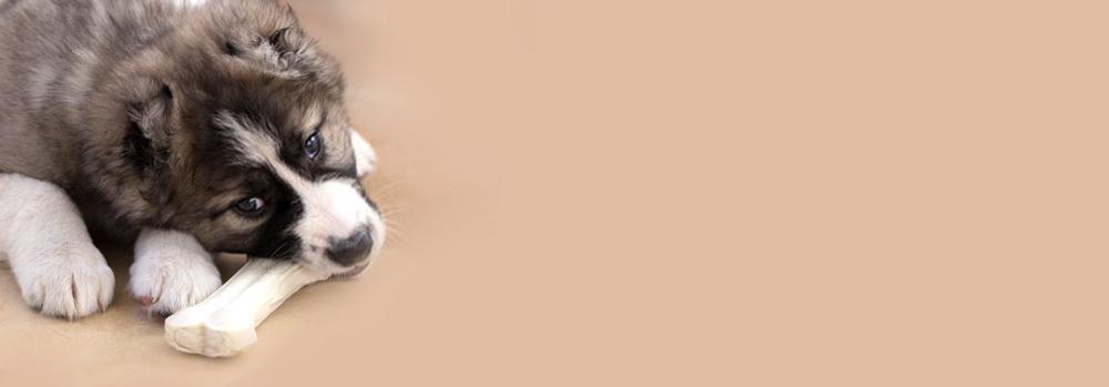 huesos de juguete para cachorros