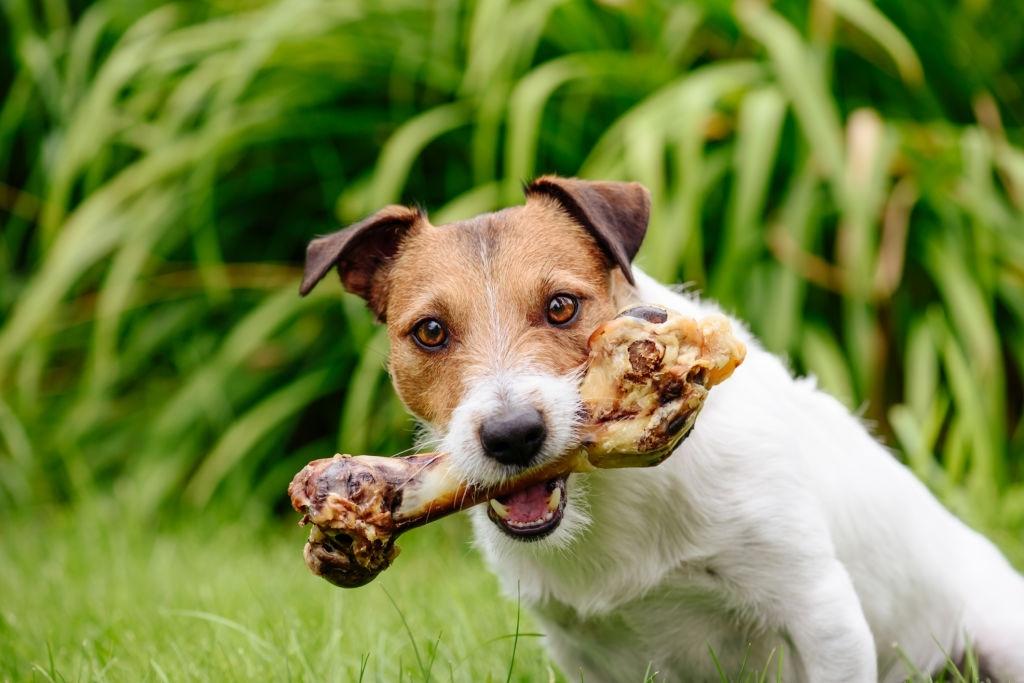 huesos perros pequeños